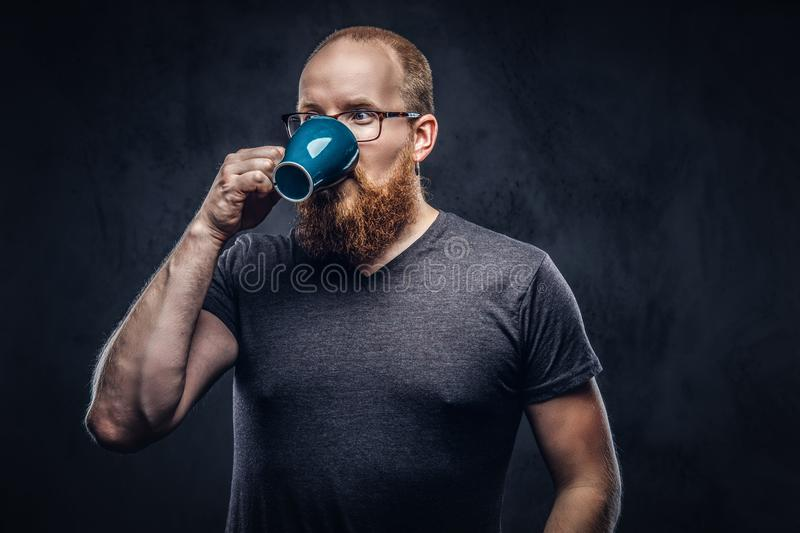 Close up portrait of a redhead bearded male drinks coffee wearing glasses dressed in a gray t-shirt, isolated over a. Close up portrait of a redhead bearded male stock photos