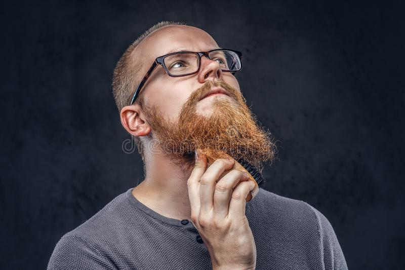 Close up portrait of a redhead bearded male wearing glasses dressed in a gray t-shirt, cares about his beard using a. Beard brush. Isolated on a dark textured stock photography