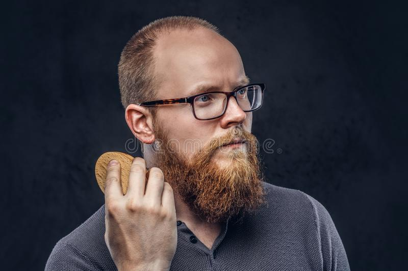 Close up portrait of a redhead bearded male wearing glasses dressed in a gray t-shirt, cares about his beard using a. Beard brush. Isolated on a dark textured royalty free stock images
