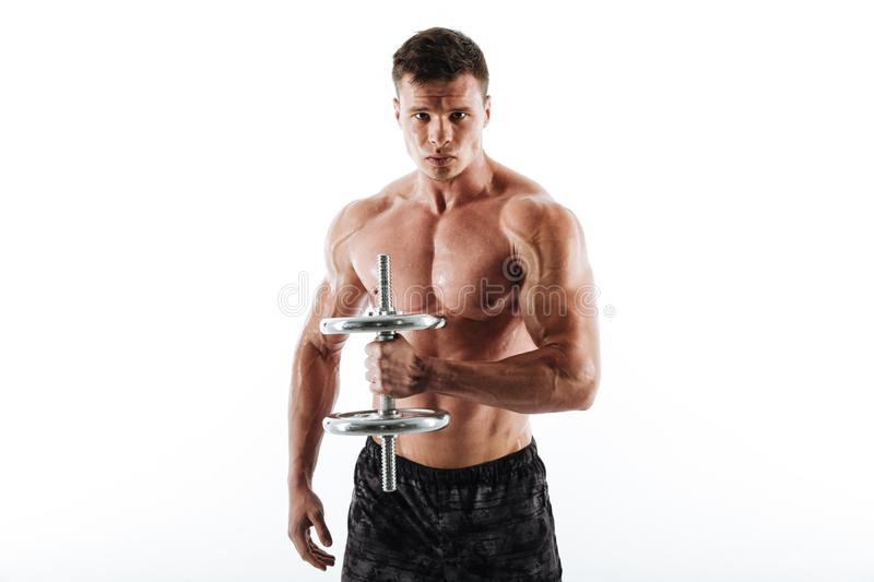 Close-up portrait of serious sweaty athletic man lifting dumbbell. Looking at camera, isolated on white background royalty free stock photography