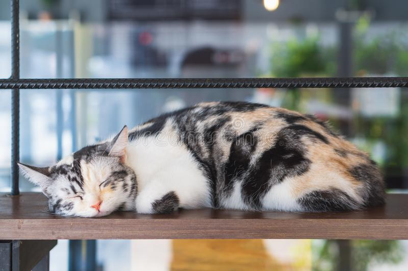 Close up portrait shot of black, brown and white sleeping cat. Adorable kitten sleeping, Selective Focus stock photography