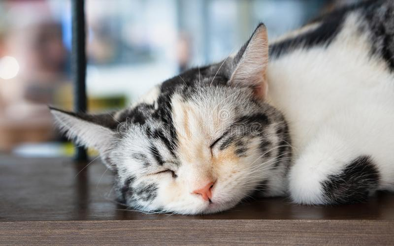 Close up portrait shot of black and white cat. Adorable kitten sleeping royalty free stock photography