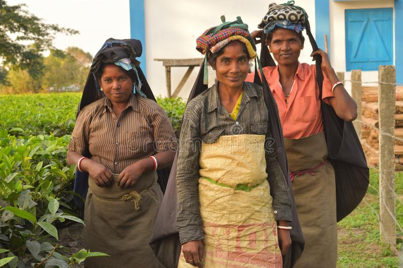 A close up portrait of three poor women tea pluckers who just finished their work. they looks at the camera and smile stock image