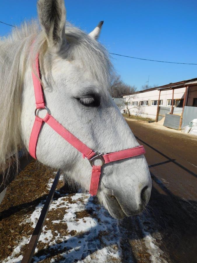 Cute white horse face closeup stock photo