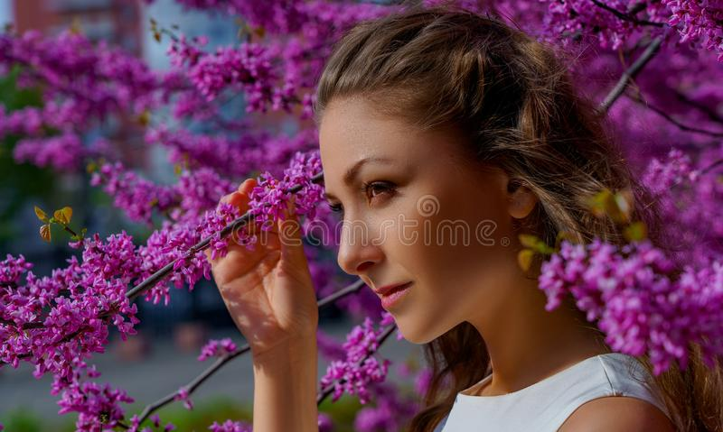Close up portrait of young beautiful woman with brown hair in white dress poses elegant in blossom pink Judas tree royalty free stock image