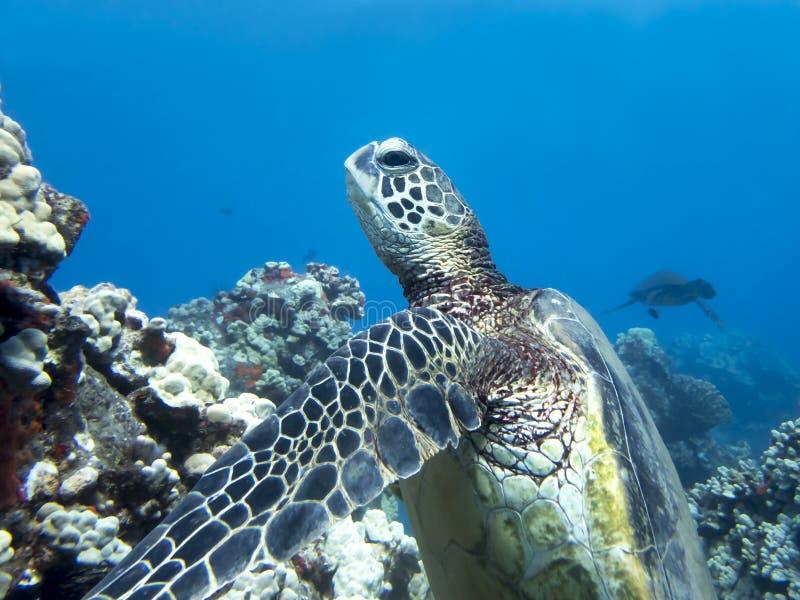 Close Up Face Of Sleeping Sea Turtle Stock Photo - Image ...
