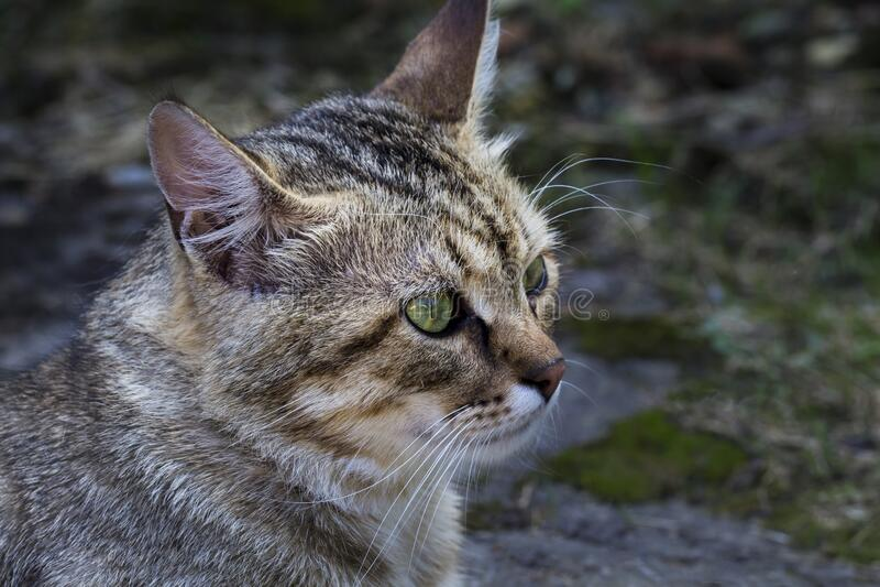 Close up profile portrait of cute gray cat stock image