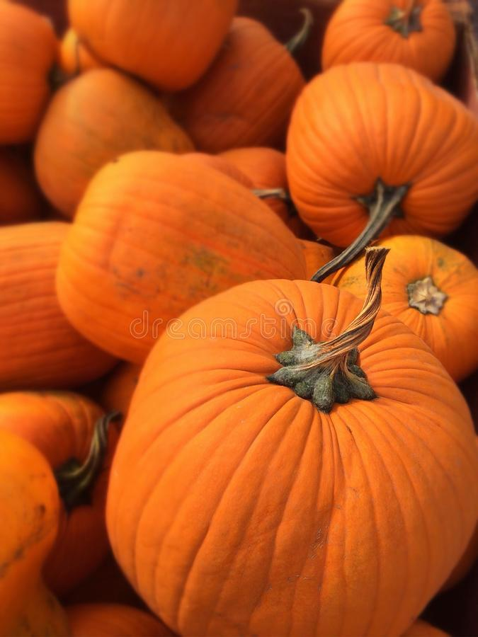 Stack of Pumpkins stock image