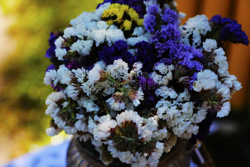 Close-up of Purple Flowers stock images