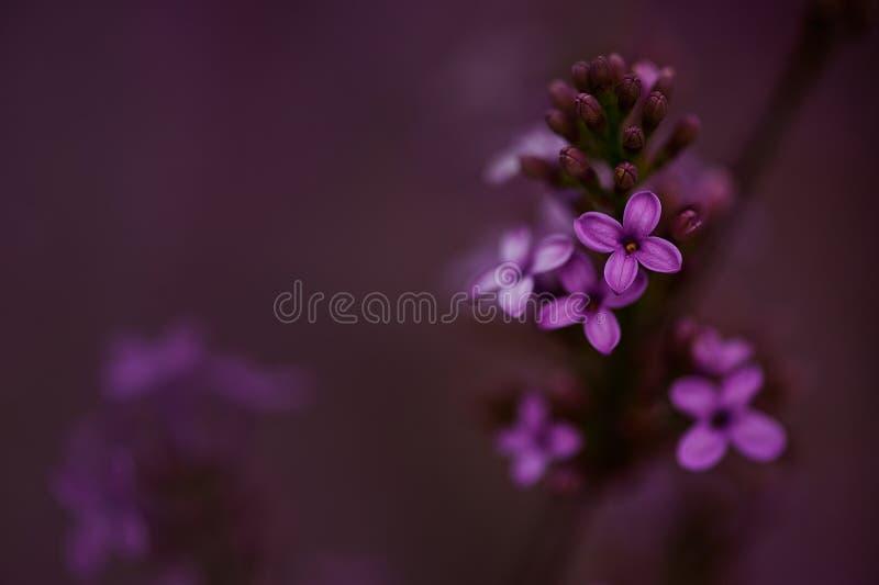 Close up of purple flowers stock image
