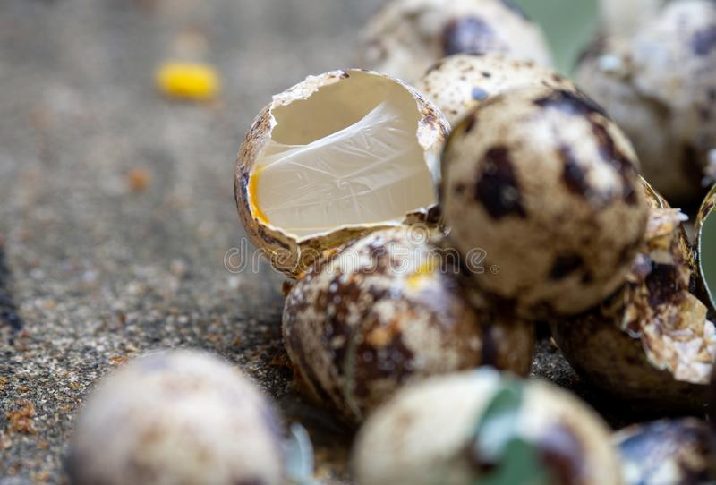 Close up of quail eggs shell on the cement floor. royalty free stock photography