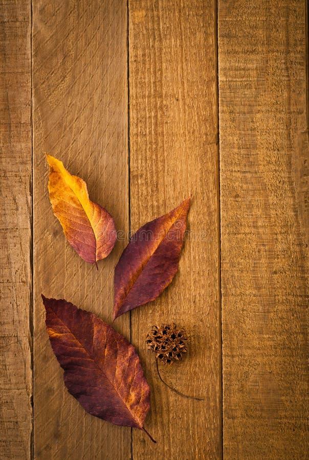 Close up rústico das folhas da queda e do vagem da semente na madeira imagem de stock royalty free