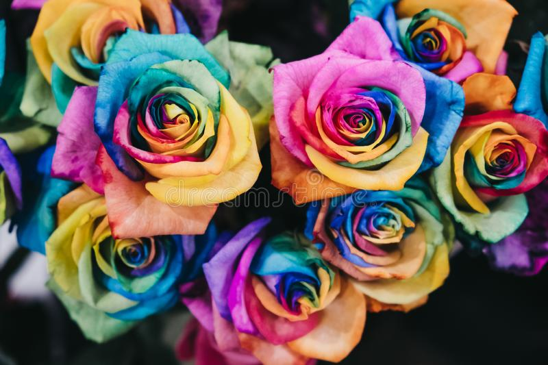 Close up of rainbow coloured roses royalty free stock images
