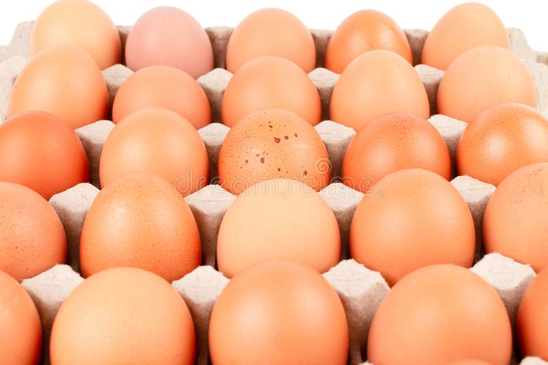 Raw brown Chicken Eggs In paper container tray box. Close up Raw brown Chicken Eggs In paper container tray box isolated on white background. The egg in the stock images