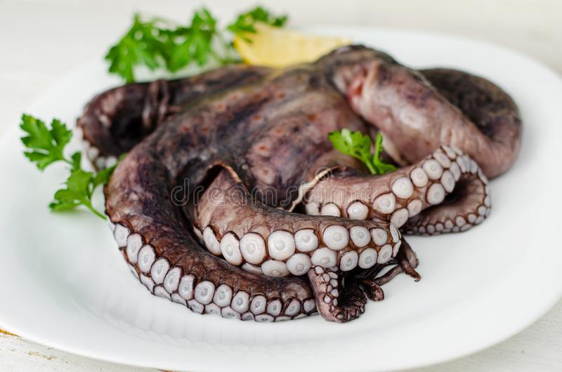 Raw octopus tentacles on white plate is ready to be cooked. Mediterranean seafood delicacy. Natural healthy food. Close up of raw octopus tentacles on white stock photos