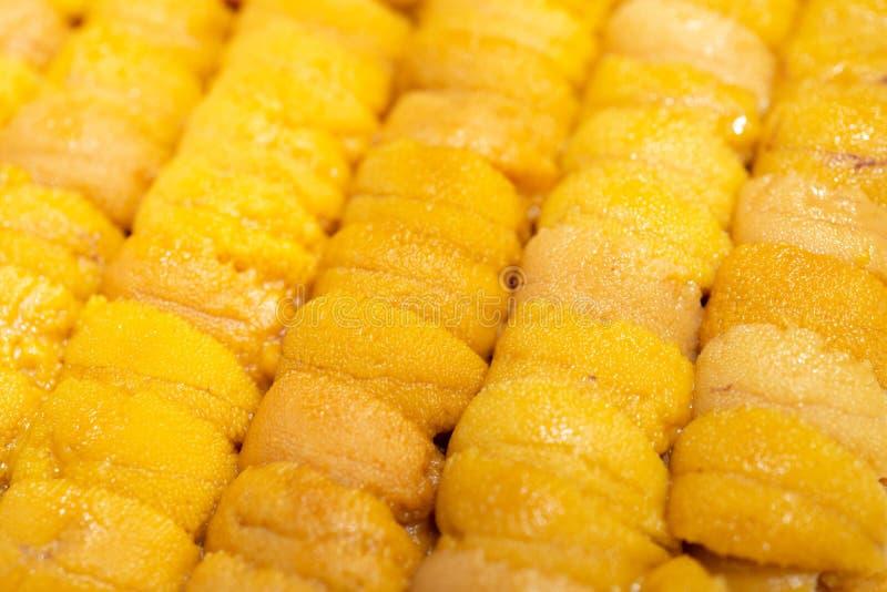 Close up raw roe sea urchin, Uni sushi or sashimi ingredients royalty free stock photos