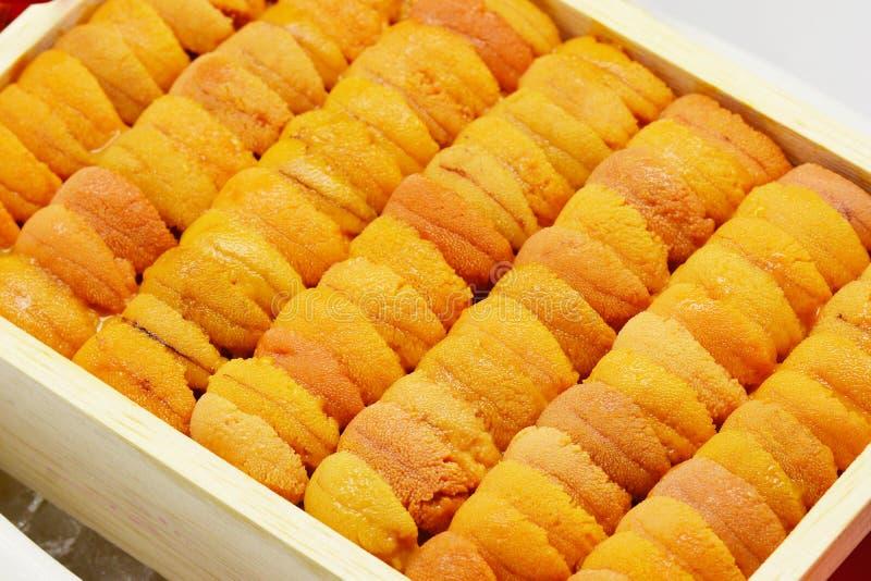 Close up raw roe sea urchin, Uni sushi or sashimi ingredients royalty free stock image