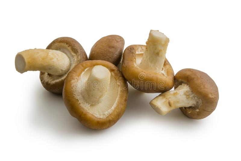 Close up raw shiitake mushrooms isolated on white background. File contains a clipping path royalty free stock image