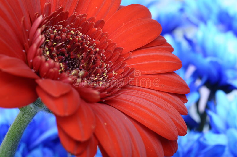 Download Close-up Of Red Heart Of Flower And Petals Stock Photo - Image: 25576746