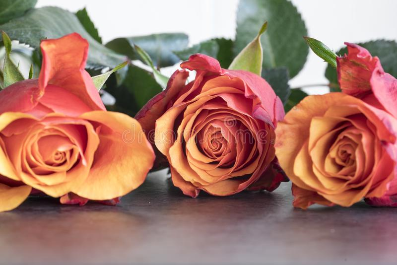Tree red roses laying on dark table royalty free stock image