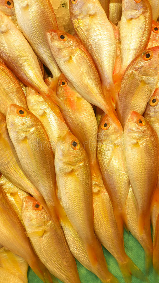 Close-up of red sea bream in the fish bazaar. Close-up of red sea bream stock photography