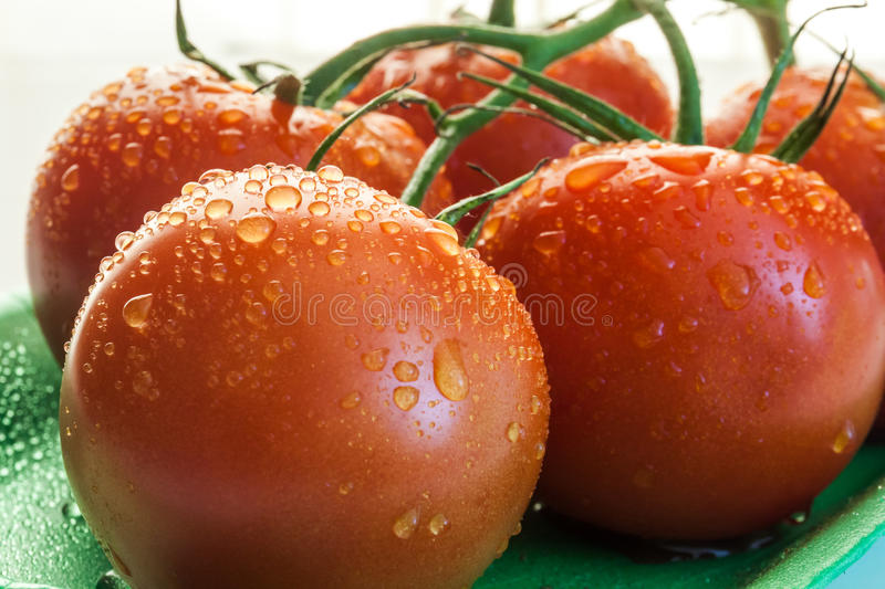 Close up of red tomatoes. With water drops royalty free stock image