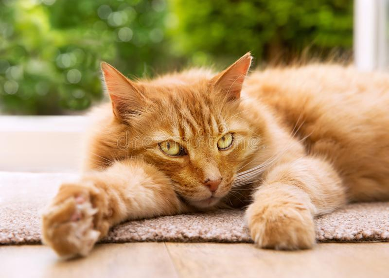 Close-up of a relaxed cat lying on a mat next to a patio door. Leading to the garden stock photos