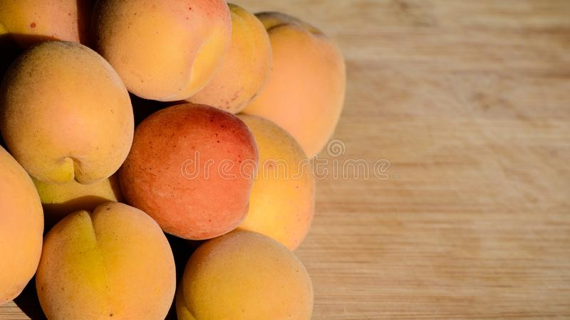 Close up of ripe Blenheim apricots freshly picked, on a wooden table; Blenheim apricots are the most coveted of the apricot royalty free stock photos