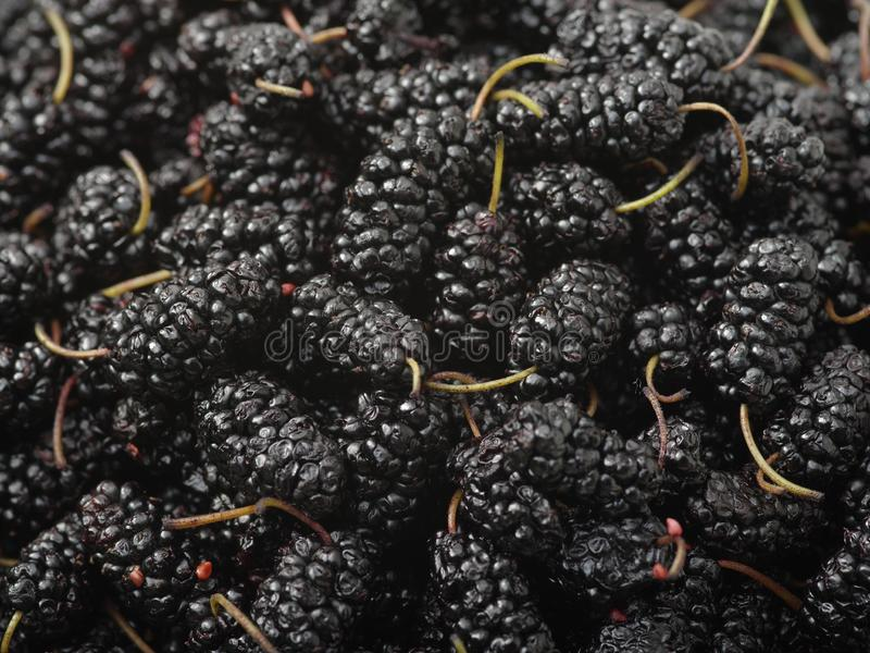 The close-up of ripe mulberry fruit royalty free stock images