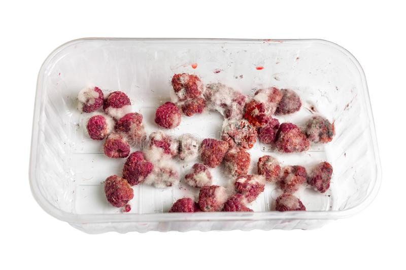 Close-up ripe red rotten raspberry with white grey mold on it. Spoiled berry in plastic box. Isolated on white.  stock photos