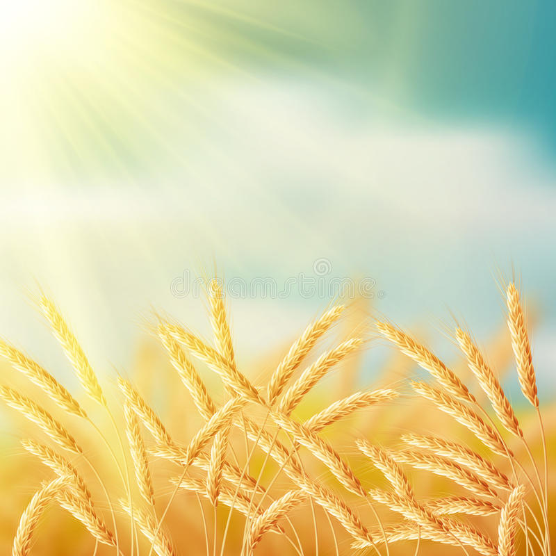 Close up of ripe wheat ears against sky. EPS 10. Vector file included stock illustration