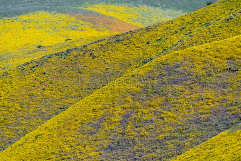 Close up of the rolling hills of Carrizo Plain National Monument during spring wildflower season stock image