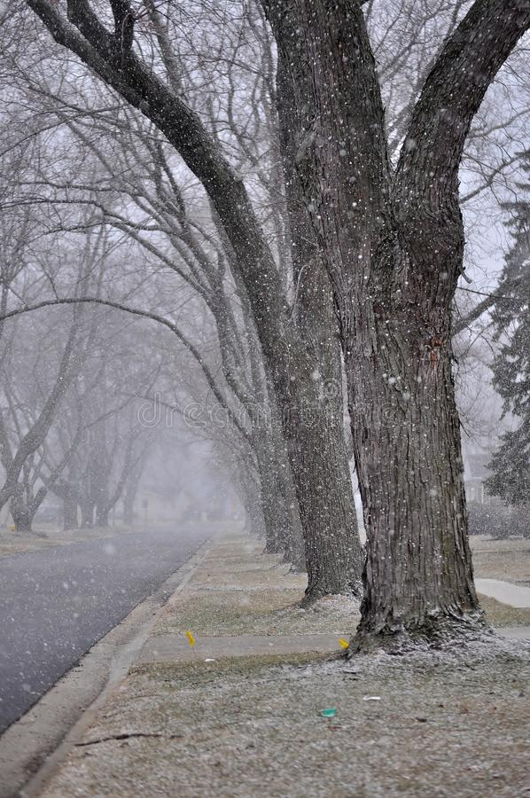 Here comes the snow. Close up of rows of old trees on the street at the beginning of a snow storm stock photography