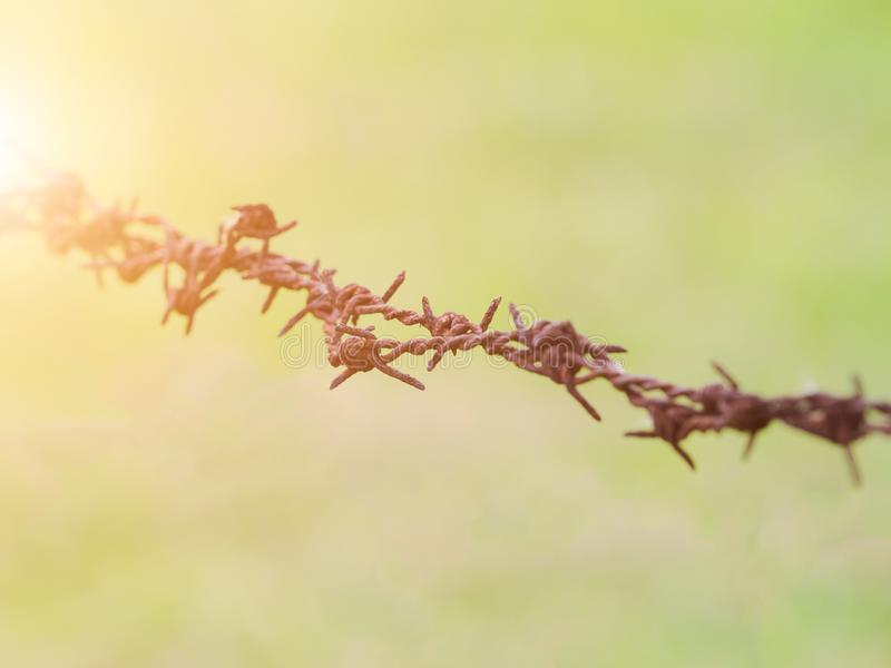 Close-up rusted barbed wire fence in the garden. royalty free stock photo