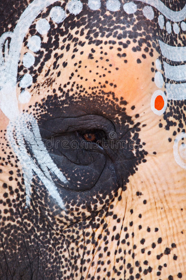 Close up of sacred elephant eye in Hindu temple royalty free stock images