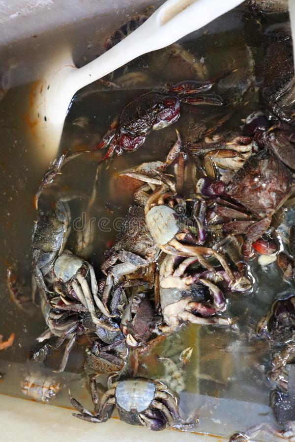 Close up, salted black crab for Thai cooking stock image