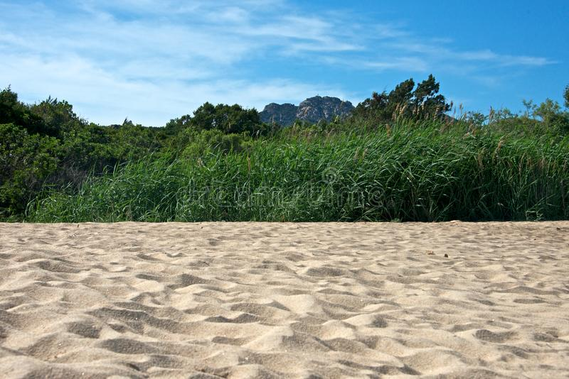 Close up of a sandy beach with a field of bamboo royalty free stock photos