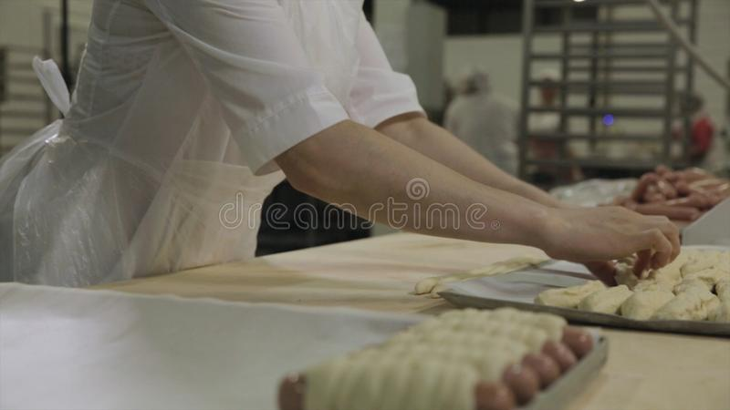 Close up for sausages wrapped in raw puff pastry at the bakery and a baker woman rolling out dough. Raw hot dogs rolled royalty free stock images