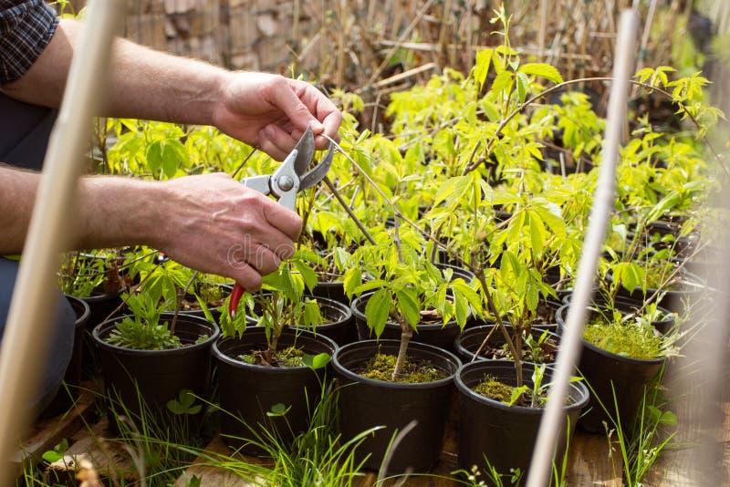Close-up Scharen van de handen de tuinman gesnoeide struik royalty-vrije stock foto's