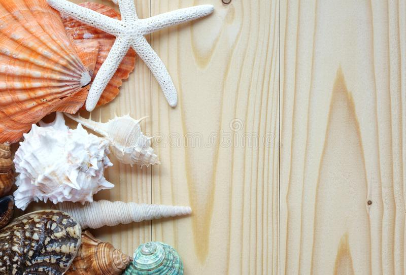 Sea shells on wooden background royalty free stock photo