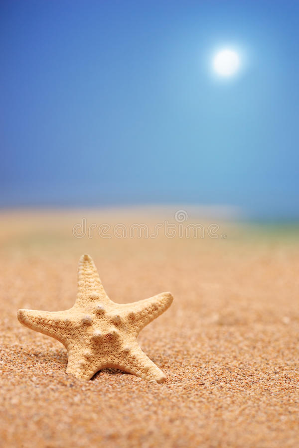 Download A Close Up Of A Sea Star On A Sandy Beach Stock Image - Image: 14856823