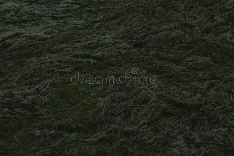 Close up of seaweed in harbour stock photos
