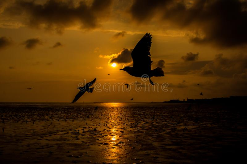 Close up Seagull flying in the air and sunset background.Freedom seagull expand wings in the sky. Seagull flying stock image