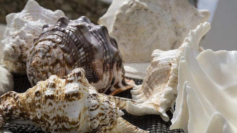 Close up of seashells with detail on shapes stock images