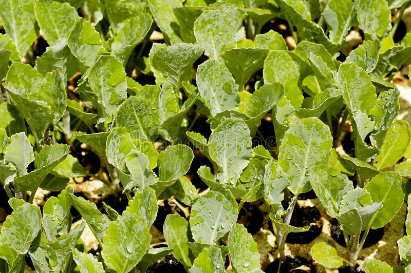 Download Close-up of seedlings stock photo. Image of farming, gardening - 22769212