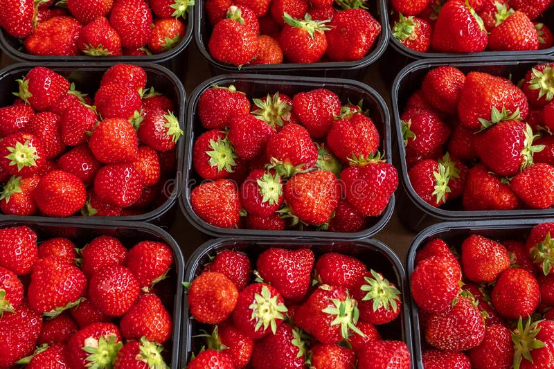 A close up of several punnets of fresh juicy looking strawberries royalty free stock image