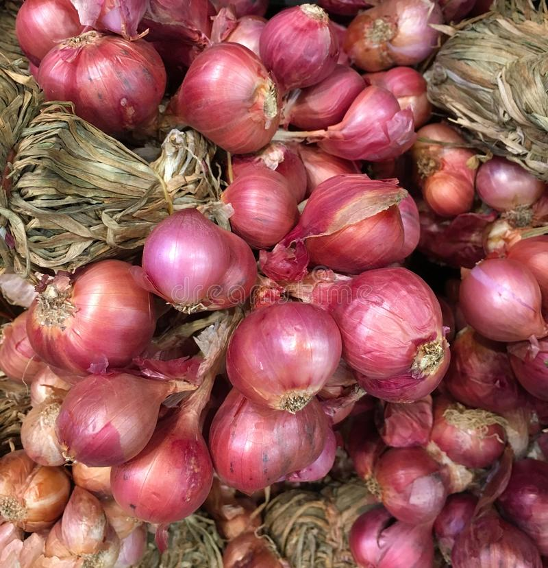 Close-up of shallot or red onion for background. Shallots or red onions are used for spice/flavouring and herb in Thai cuisine and in herbal medicine royalty free stock image