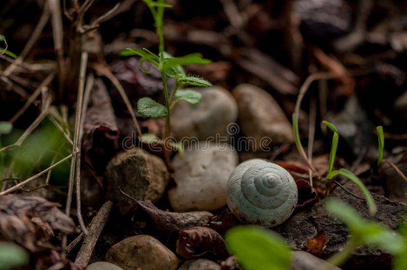 Close-up on a shell. Close-up on a snail`s white shell sitting on the gound stock images