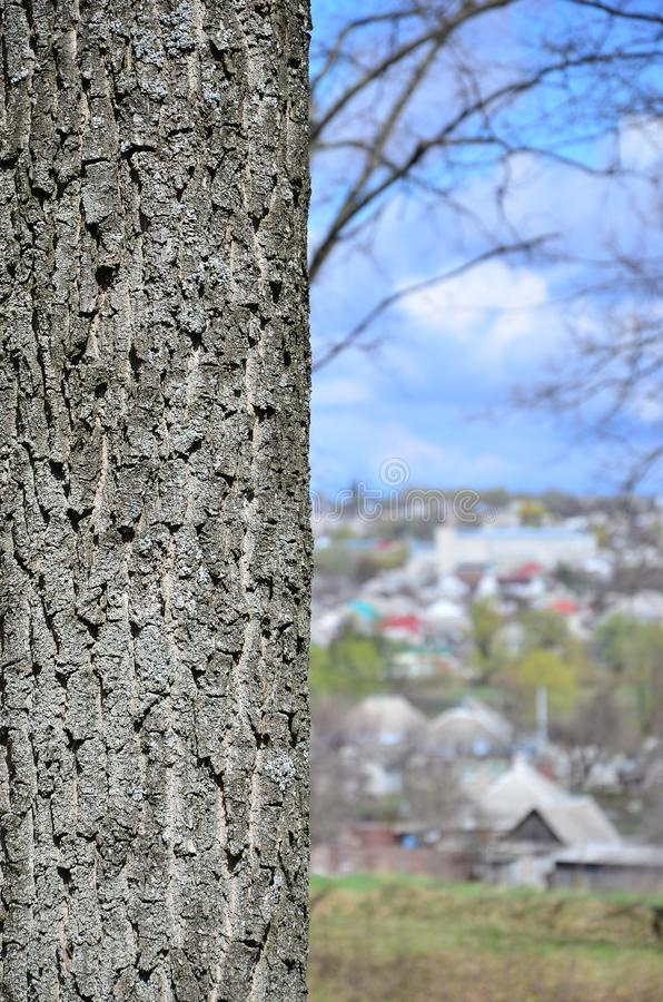 Close up shot of the bark from the tree trunk against the background of a blurred rural landscape with many dwellings and plantin royalty free stock photo