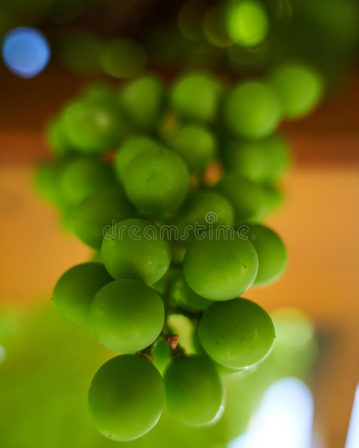 Close up shot of beautiful green fresh grapes stock image